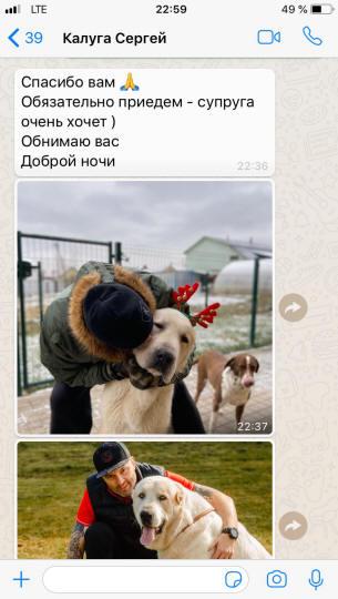 отзывы о сары шайтан щенки среднеазиатской овчарки москва