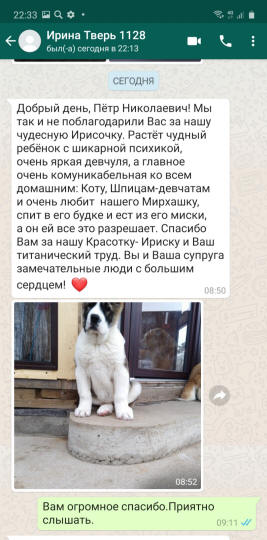 отзыв о щенках питомника сары шайтан