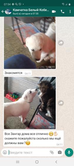 отзывы о щенках алабая сары шайтан наши дети в новом доме